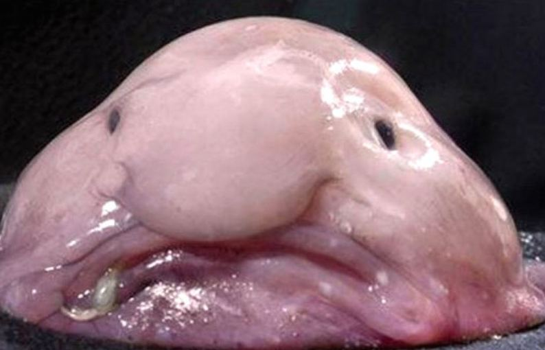 The ugly face of fish.
