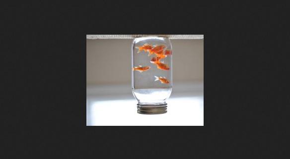 fishjarborder