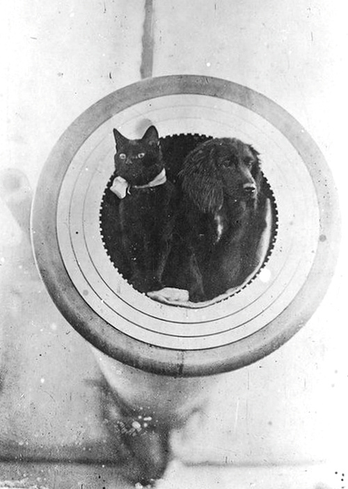 Make love not war. An adorable cat and dog duo aboard the battleship HMS Barham