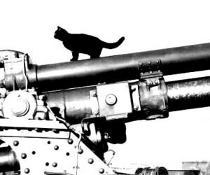 Lucky-Black-Cats-War-FT 2