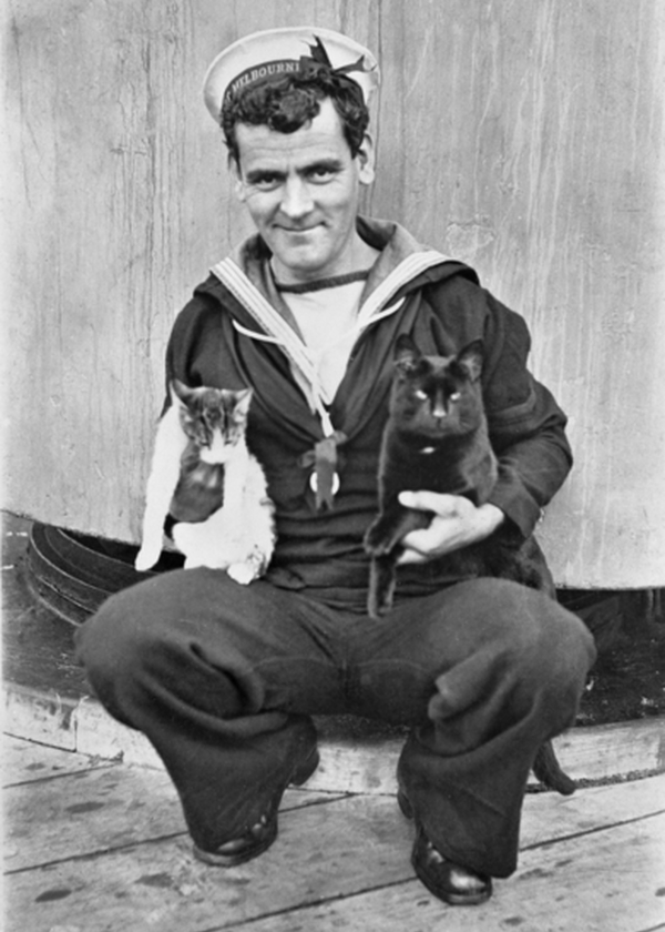 AB Raymond Stewart Haig on board HMAS Melbourne with two of the ship's cats.