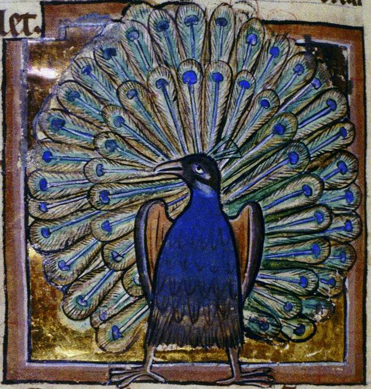 Medieval-Peacock-Illumination