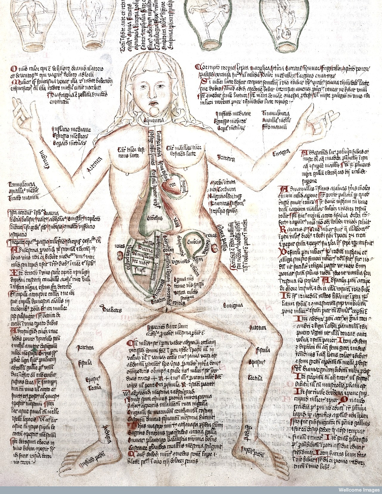 Pregnant woman with possible positions of the foetus. From The Apocalypse of St John, Germany, 1420 | Wellcombe Library MS 49