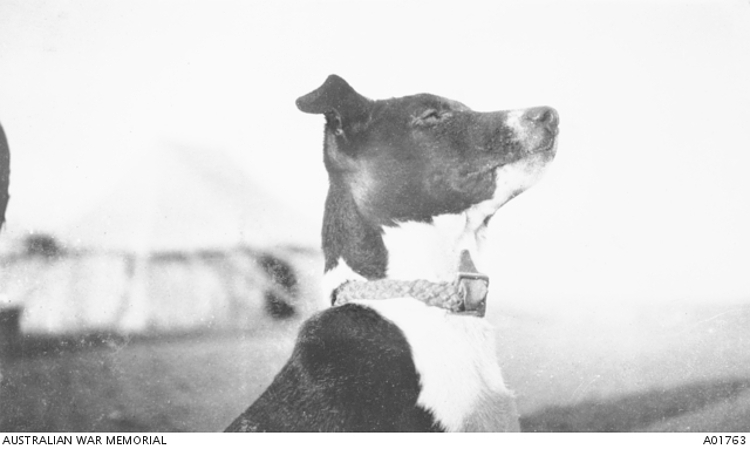 Cacolet-WWI-Dogs