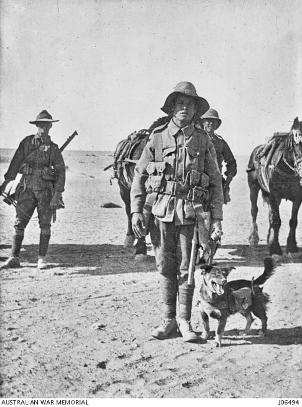Joe-Bourke-WWI-Dogs