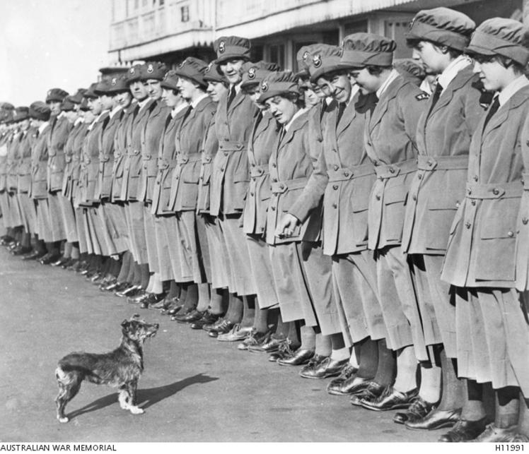 WRAF-WWI-Dogs