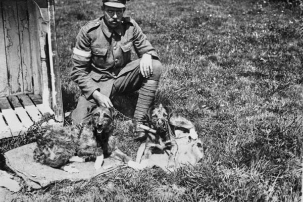WWI-Dogs-001