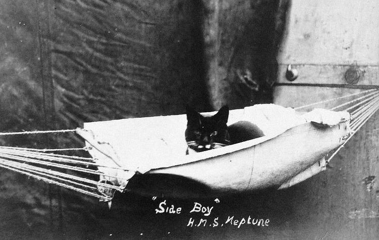 Side-Boy poses in his hammock.
