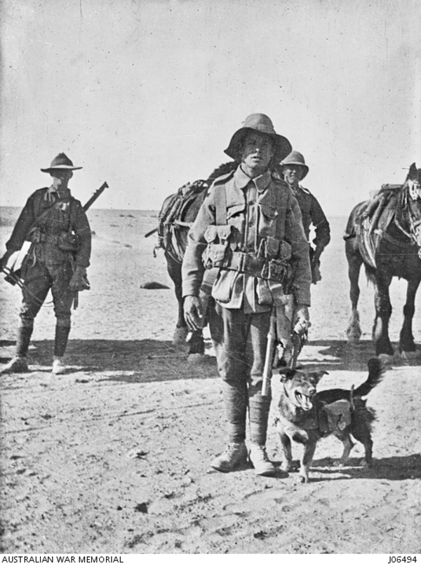Joe-Bourke-WWI-Dogs