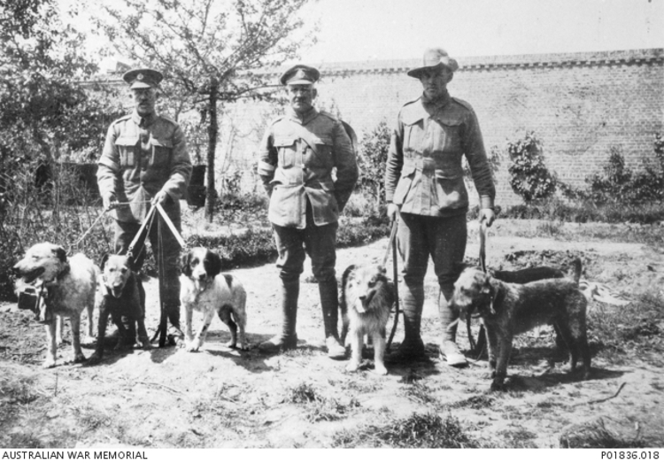 Messenger-Dogs-WWI-Dogs