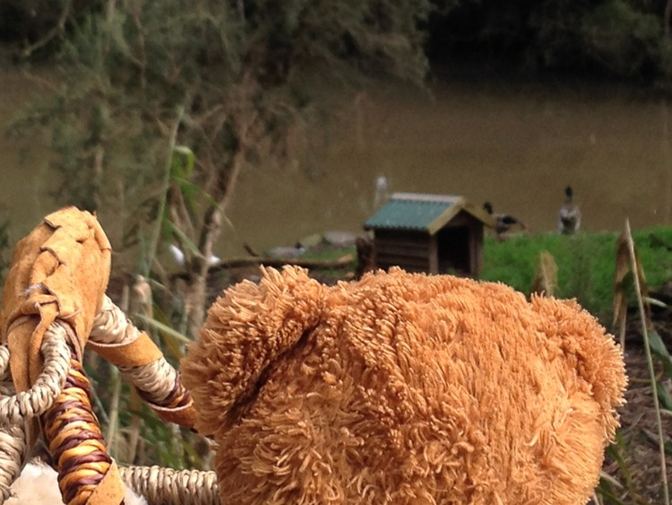 Teddy-Bears-Picnic-026